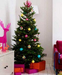 PRE-ORDER: Nordmann Fir Christmas Tree - Fresh Cut Non-Drop Luxury Tree (approx 6ft) + Delivered 23rd Nov - 28th Nov +