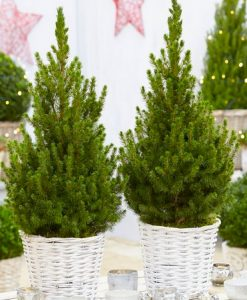 Pair of 80cm Contemporary Christmas Trees in Festive Baskets