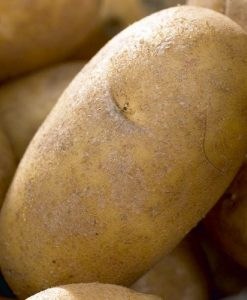 Charlotte - Salad Crop Seed Potatoes - Pack of 10
