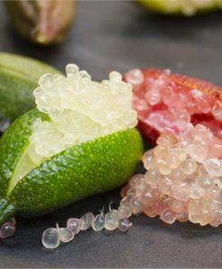 Finger Lime - Citrus Australasica - Caviar Lime Tree - 60cms