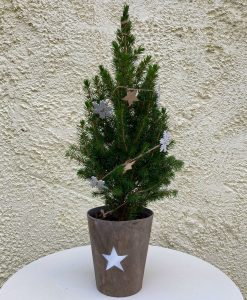 Ready Decorated Real Mini Christmas Tree in Wood Pot - Tabletop Small Christmas Tree