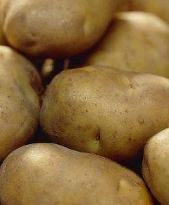 Wilja - 2nd Early Seed Potatoes - Pack of 10