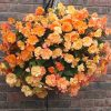 Apricot Shades Preplanted Baskets