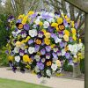 Pansy Cool Wave 11in Yellow Hanging Basket