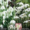 Single & Double Snowdrops In The Green Twinpack