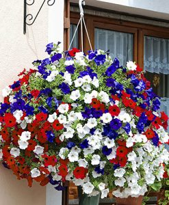Union Jack Pre-Planted Basket