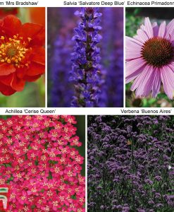 Garden 30 Perfect for Pollinators Perennial Collection Thompson & Morgan