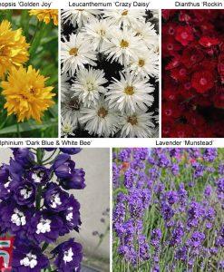 Garden 30 Sumptuous Sun Loving Perennials Thompson & Morgan