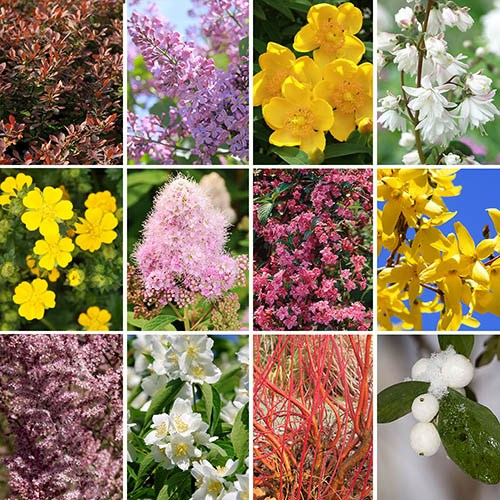 The Ultimate Winter Hardy Shrub Collection YouGarden