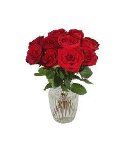 Garden A Dozen Red Roses Flowers & Plants Co.