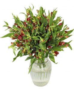 Garden Alstroemeria Bliss Flowers & Plants Co.