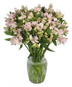 Garden Alstroemeria Forever Flowers & Plants Co.