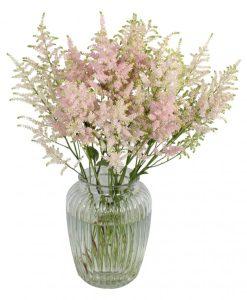 Garden Astounding Astilbe Flowers & Plants Co.