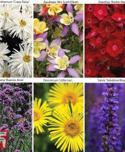 Garden Best Value Perennial Collection Thompson & Morgan