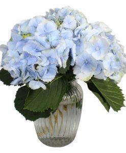 Garden Blue Sky Flowers & Plants Co.