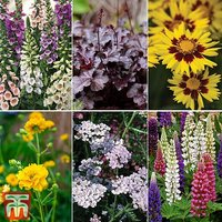 Potted Perennial Plant Bundle