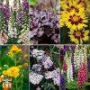 Garden Bumper Potted Perennial Collection Thompson & Morgan
