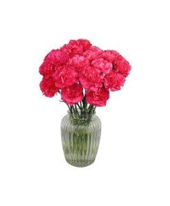 Garden Carnival Carnations Flowers & Plants Co.