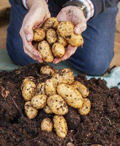 Complete Patio Potato Top-up Kit