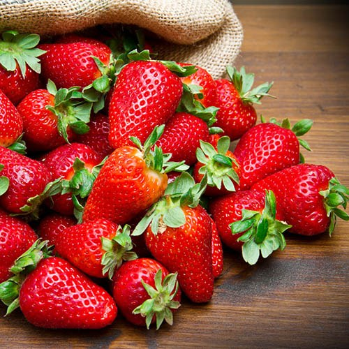 Everbearer Strawberry Sweet Summer