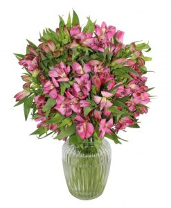 Garden Extravagant Alstro Flowers & Plants Co.