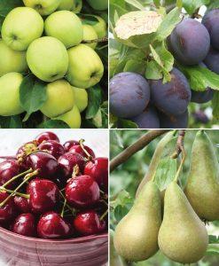 Garden Favourite Fruit Tree Collection 4 Trees Thompson & Morgan