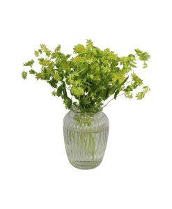Garden Green Glory Flowers & Plants Co.