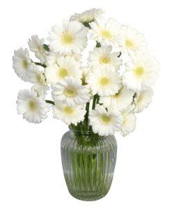 Garden Lonely as a Cloud Flowers & Plants Co.