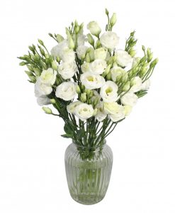 Garden Lovely Lisi Flowers & Plants Co.