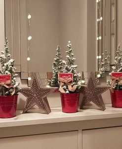 Miniature Decorated Living Christmas Conifers - 3 pack