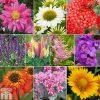 Garden Nurserymans Choice Cottage Garden Perennials Thompson & Morgan