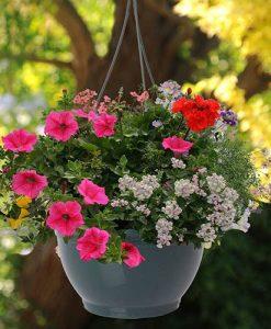 Pair Of Pre-Planted Designer Mix Hanging Baskets