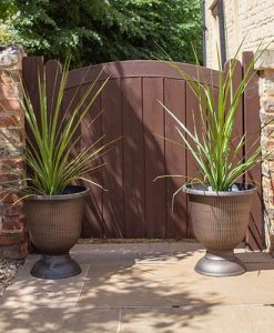 Pair of Cordyline and Decorative Stripe Urns
