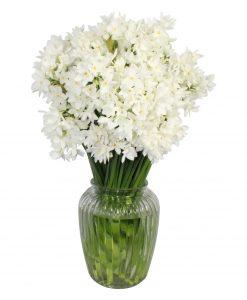 Garden Paperwhite Passion Flowers & Plants Co.