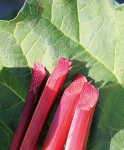 Rhubarb Sanvitos Red