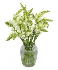 Garden Snapdragon Sensation Flowers & Plants Co.