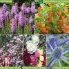 Garden Stunning Summer Perennials Thompson & Morgan