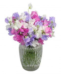 Garden Sweet Pea Medley Flowers & Plants Co.