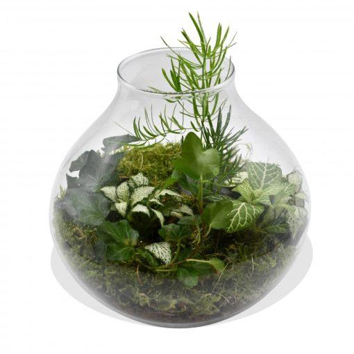 Garden Terrarium in Fish-Bowl Vase Flowers & Plants Co.