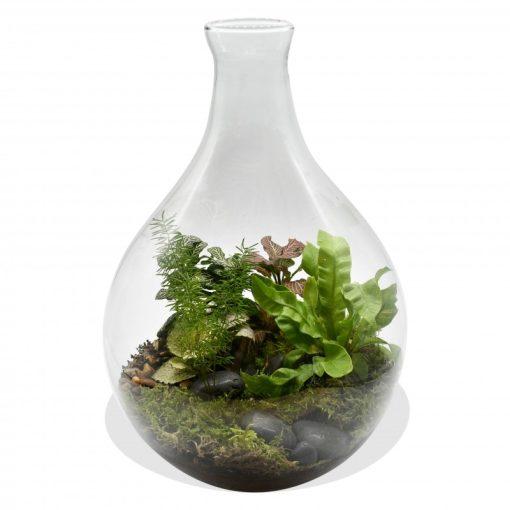 Garden Terrarium in Hourglass vase Flowers & Plants Co.