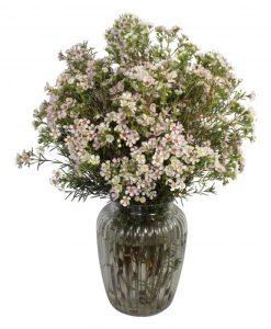 Garden Waxing Lyrical Flowers & Plants Co.
